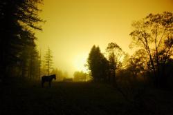 brume-de-nuit.jpg