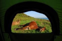 vue de la tente