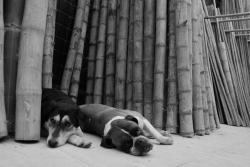 dans-les-bambous.jpg