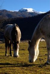 fev-2013-pankesi-chevaux.jpg