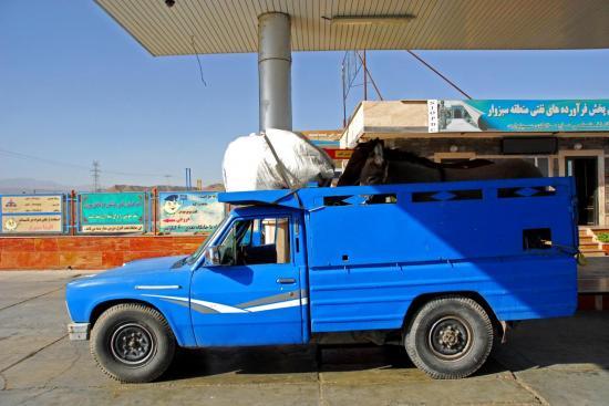 Gazelle pour Mashad