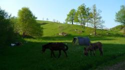 20/04/2011 Croatie